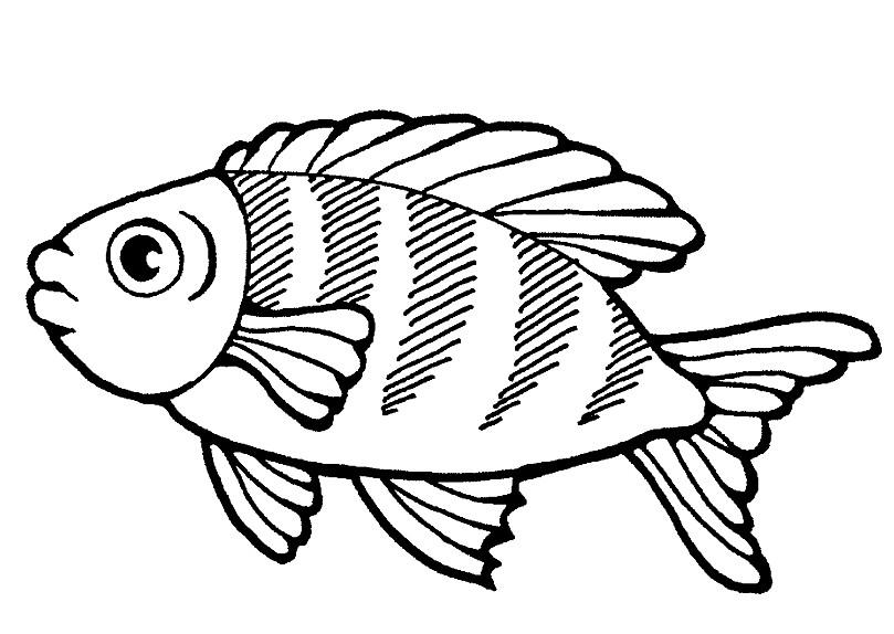 Раскраска наш аквариум