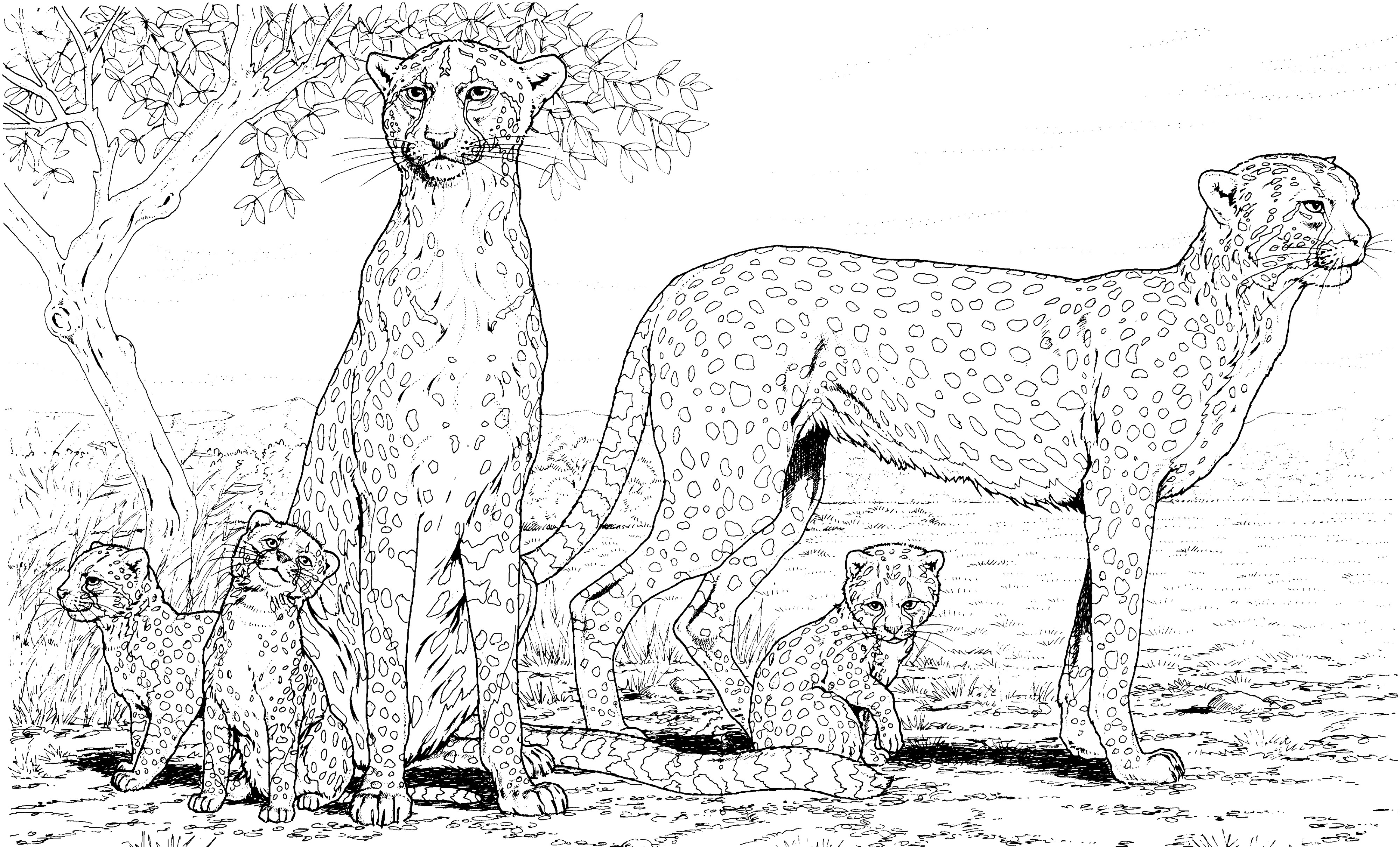 Раскраска семья гепардов