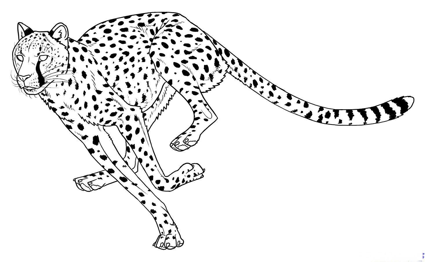Раскраска прыжок гепарда