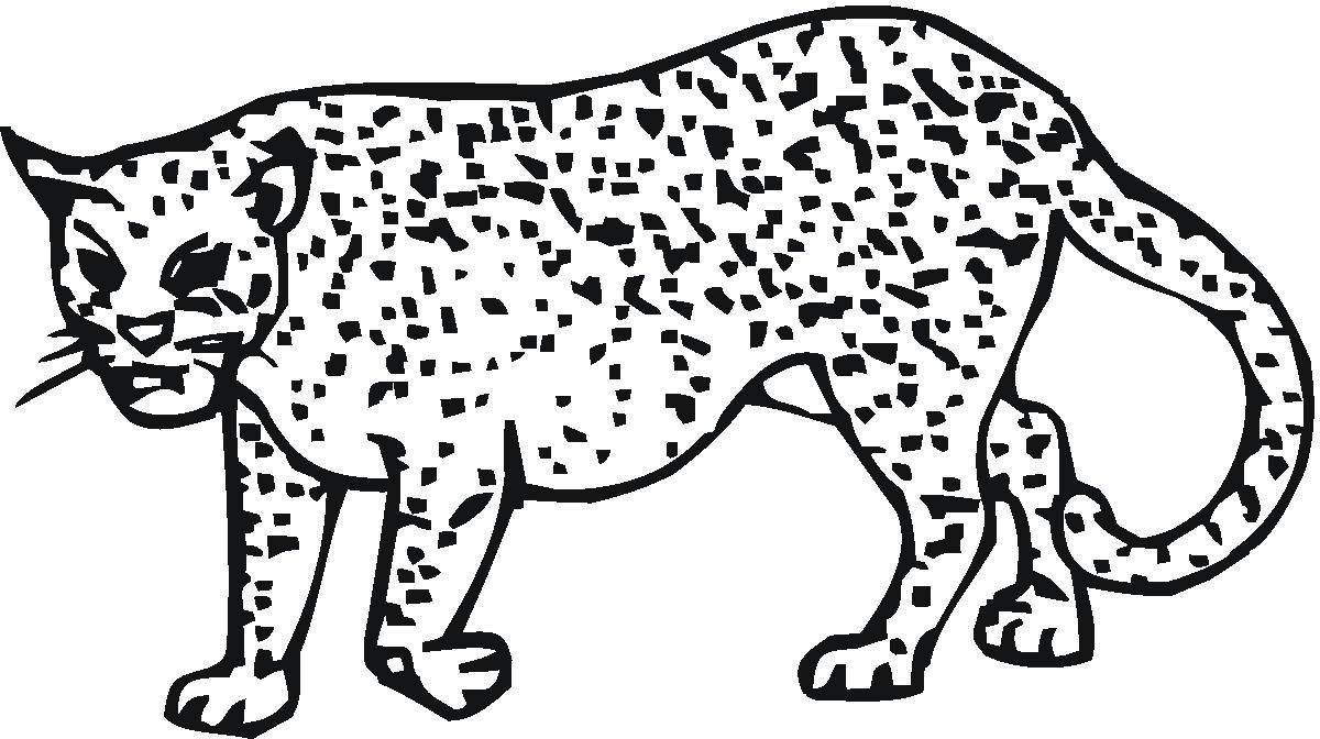 Раскраска злой гепард