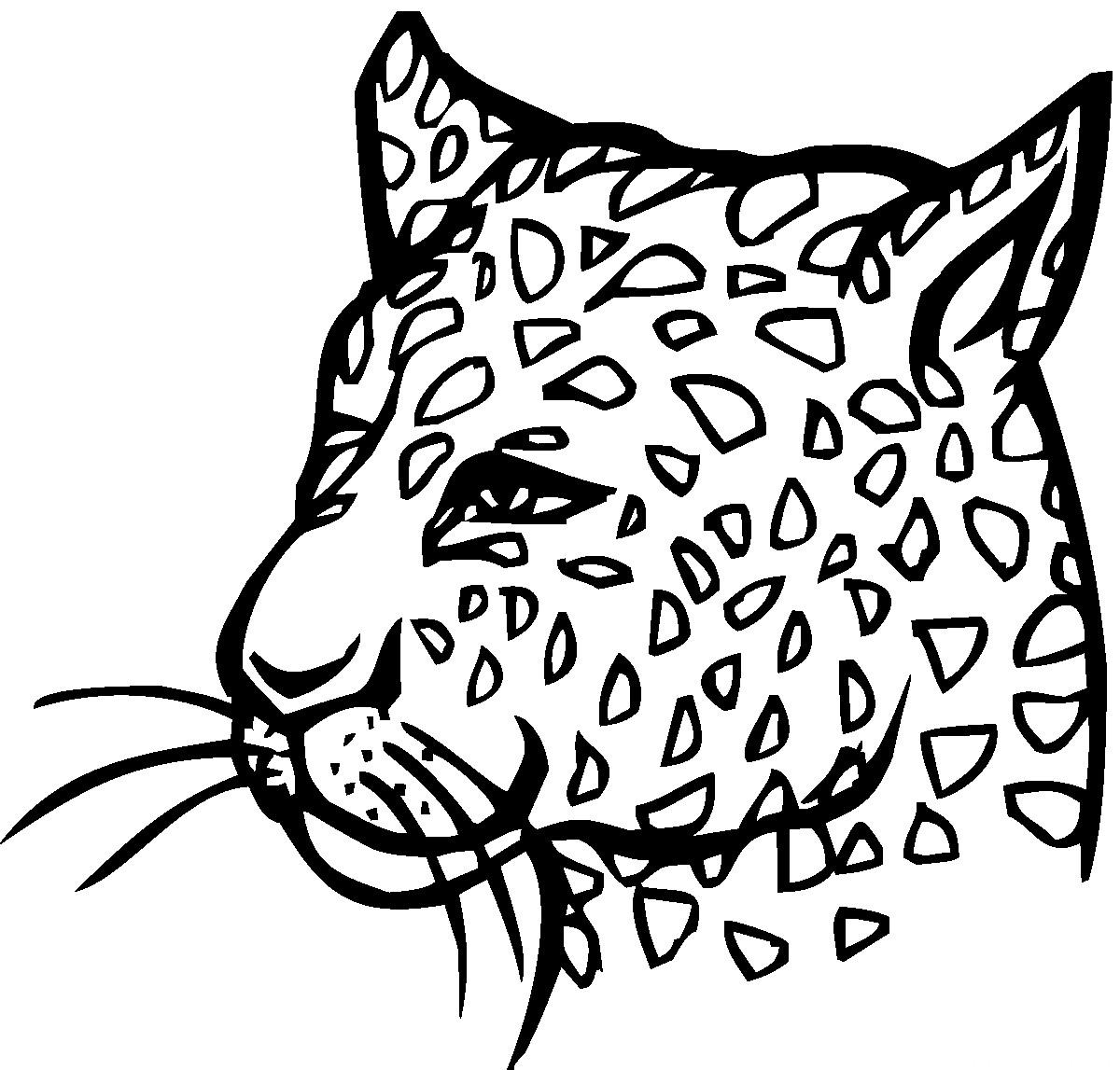 Раскраска голова гепарда