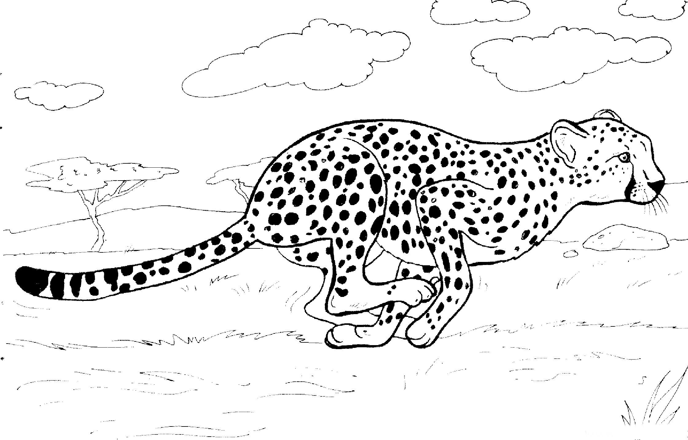 Раскраска гепард на охоте