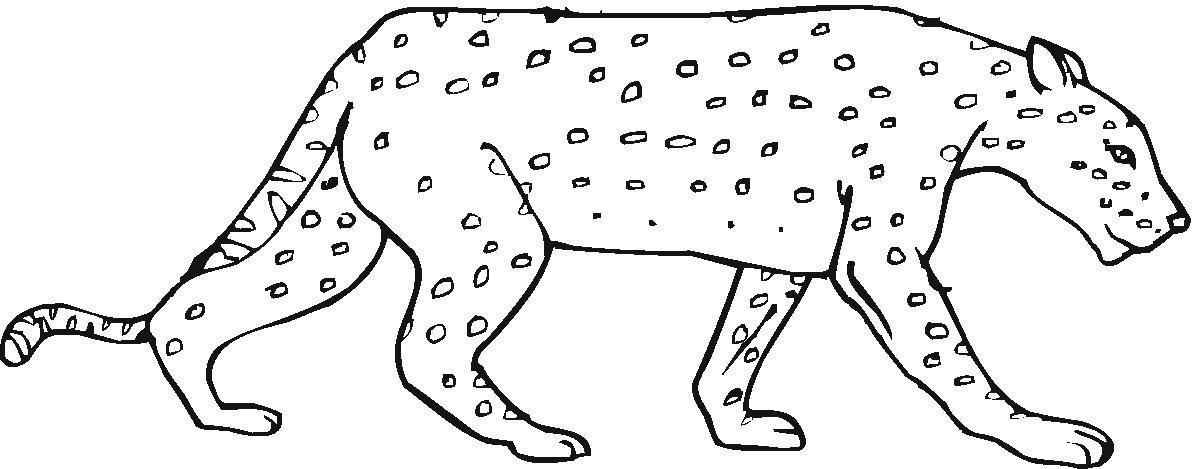 Раскраска хитрый гепард