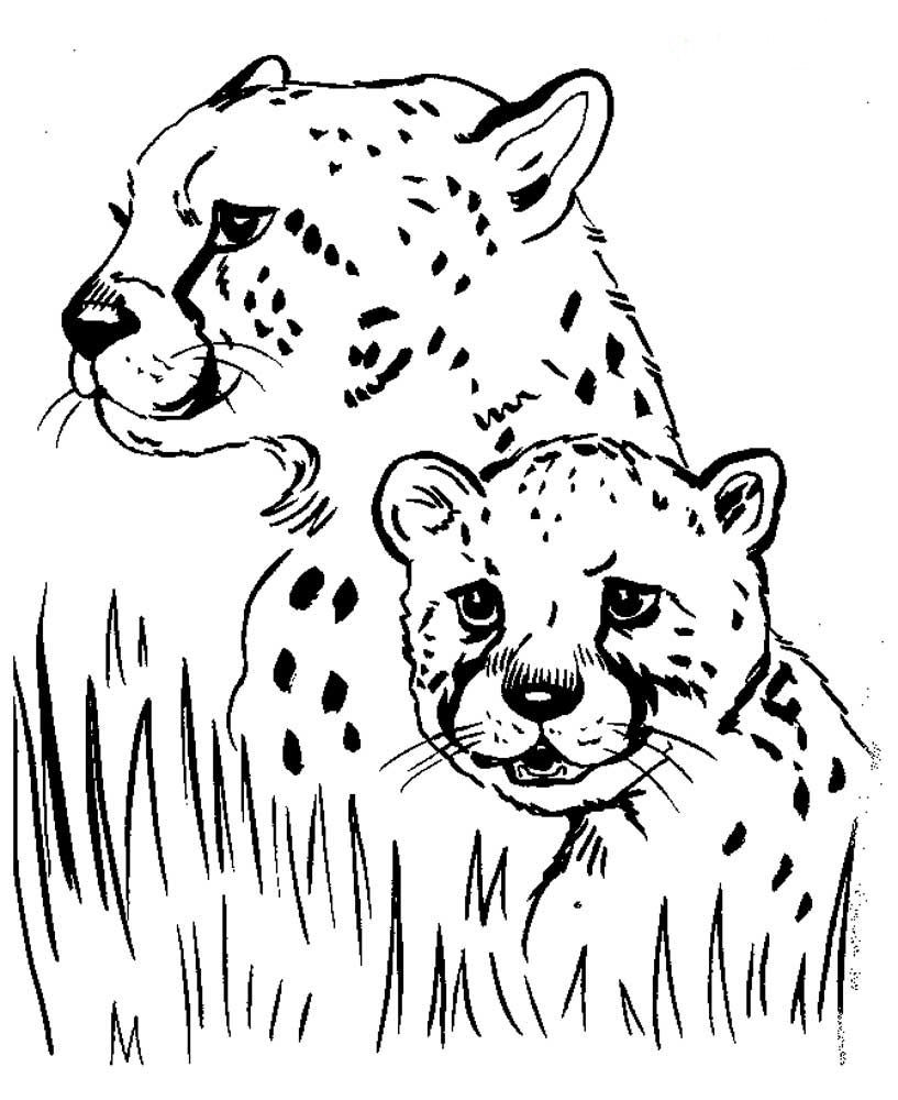 Раскраска маленький гепард и его мама