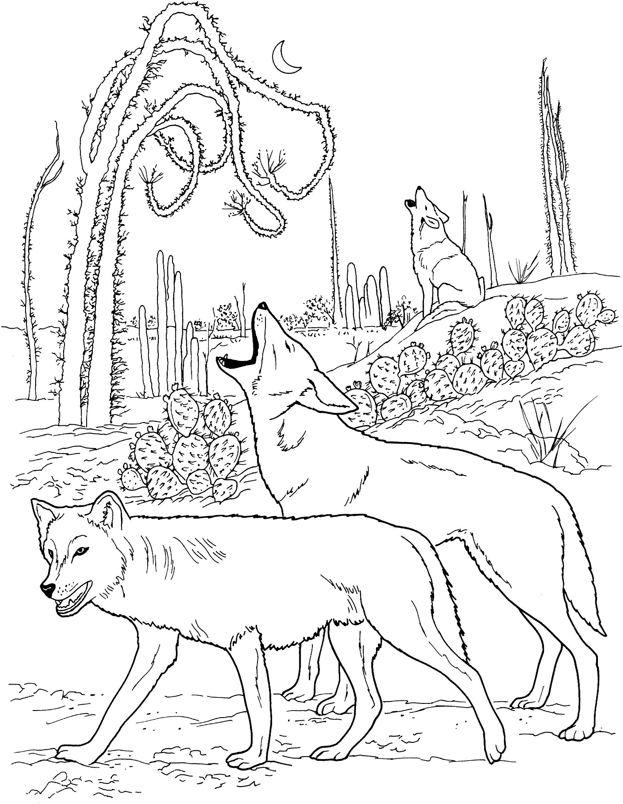 Раскраска вой койотов