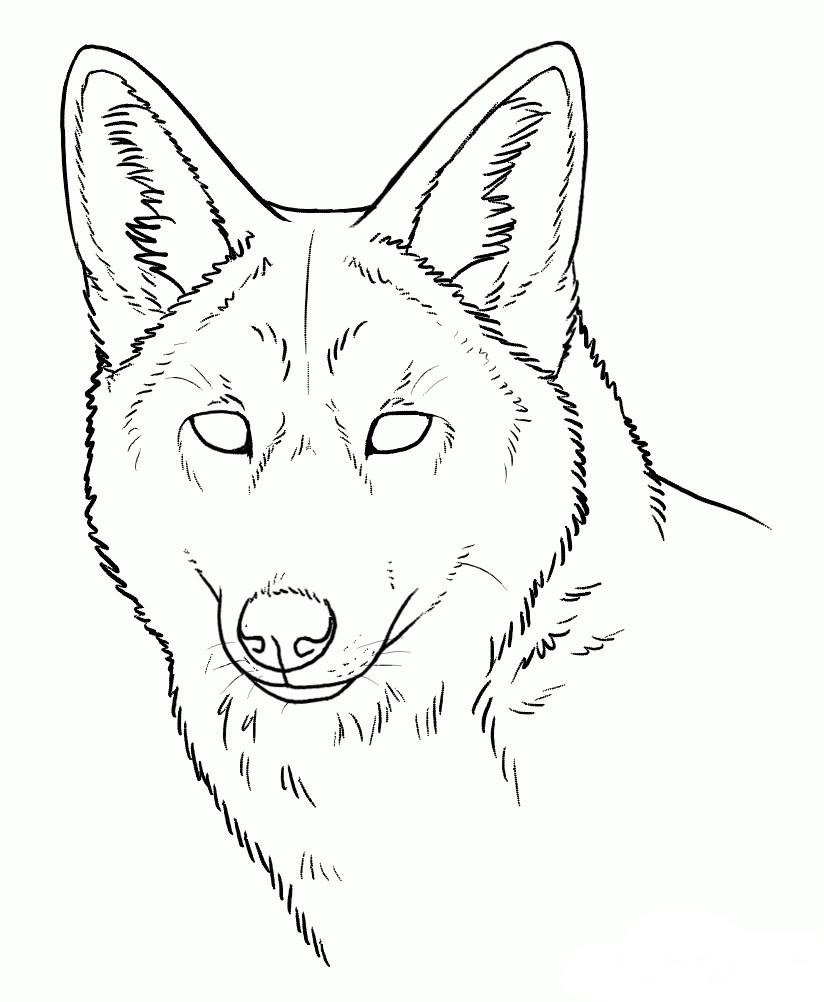Раскраска голова койота