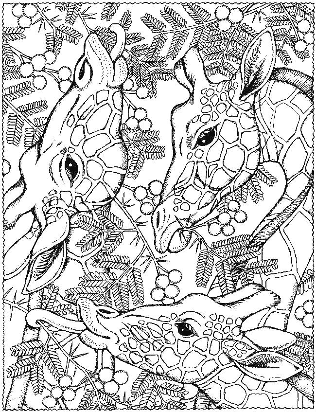 Раскраска антистресс жирафы