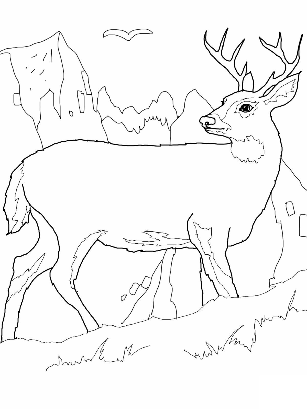 ОЛЕНЬ | Раскраски для детей распечатать бесплатно в формате А4
