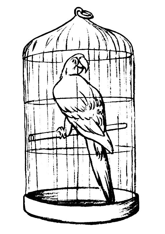 Раскраска попугай в клетке