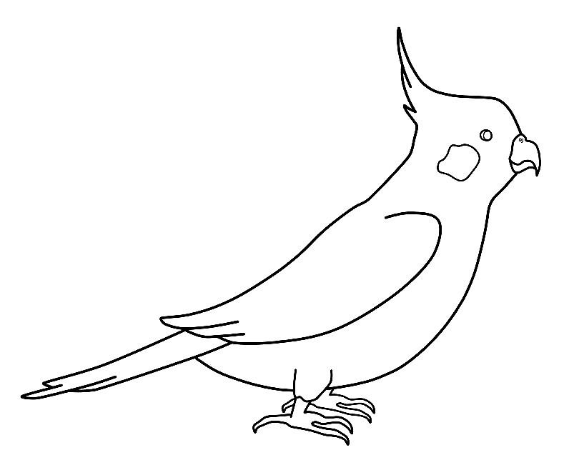Картинки попугаев для срисовки