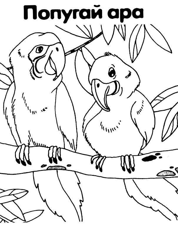 попугаи раскраски для детей распечатать бесплатно в формате а4