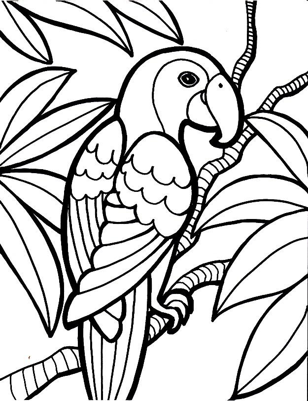 Раскраска попугаи в джунглях