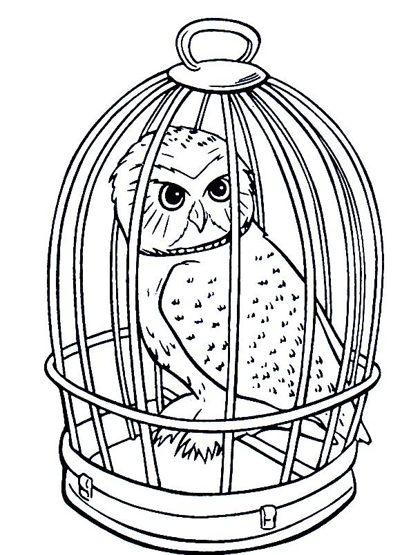 Раскраска сова в клетке