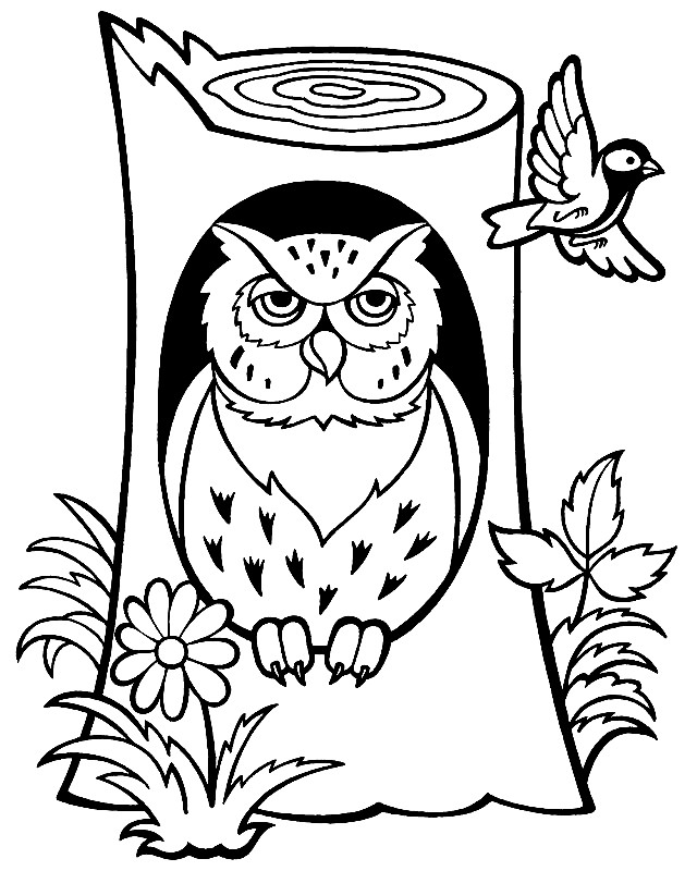 СОВЫ | Раскраски для детей распечатать бесплатно в формате А4