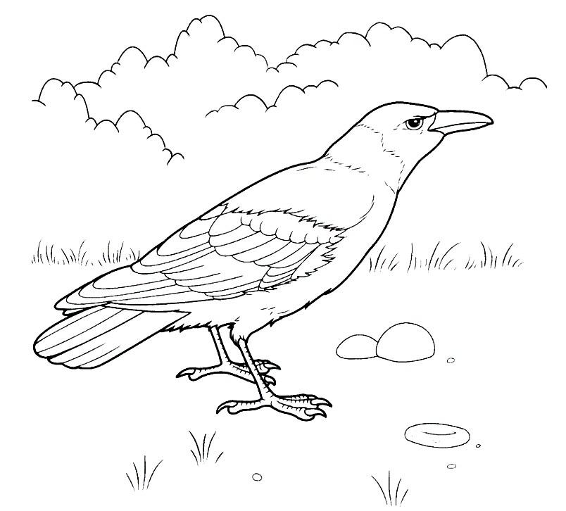 Раскраска серая ворона