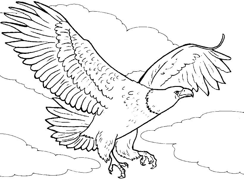 Раскраска орлан