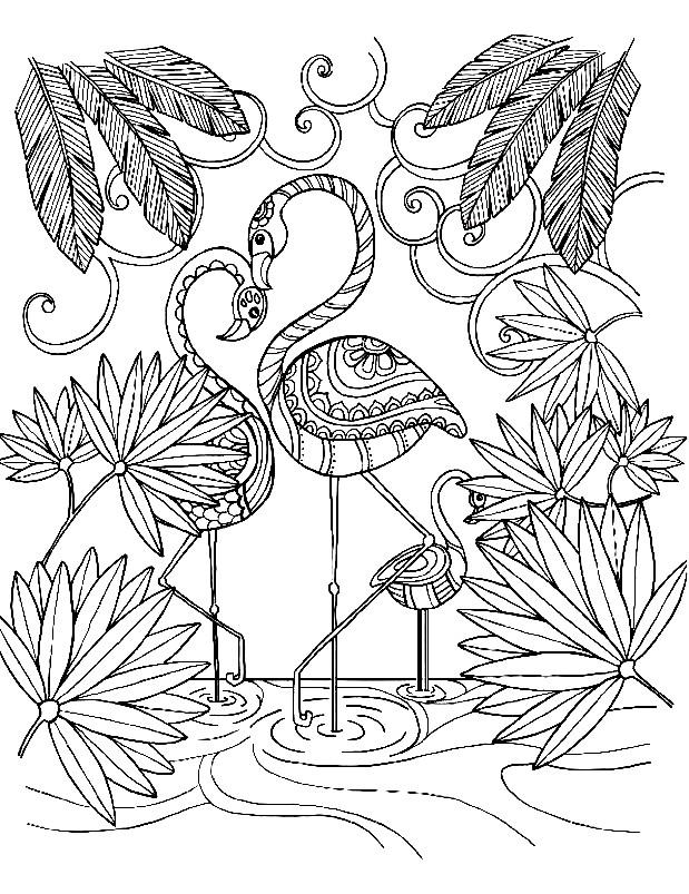 Раскраска красивые фламинго