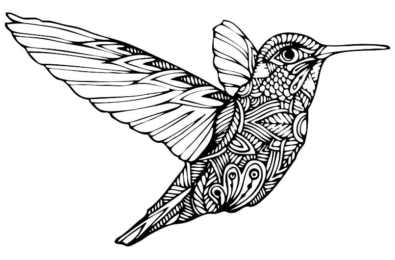 Раскраска удивительная колибри