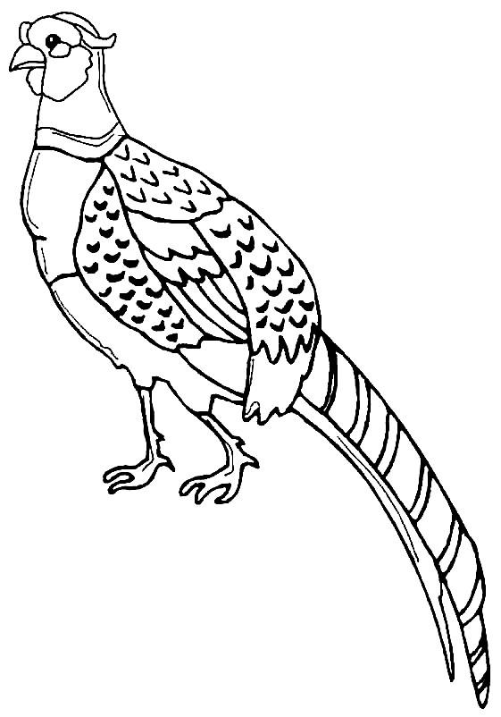 Раскраска фазан