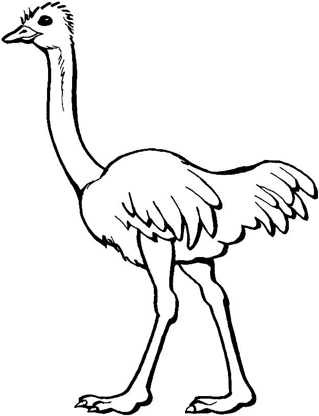 Раскраска страус
