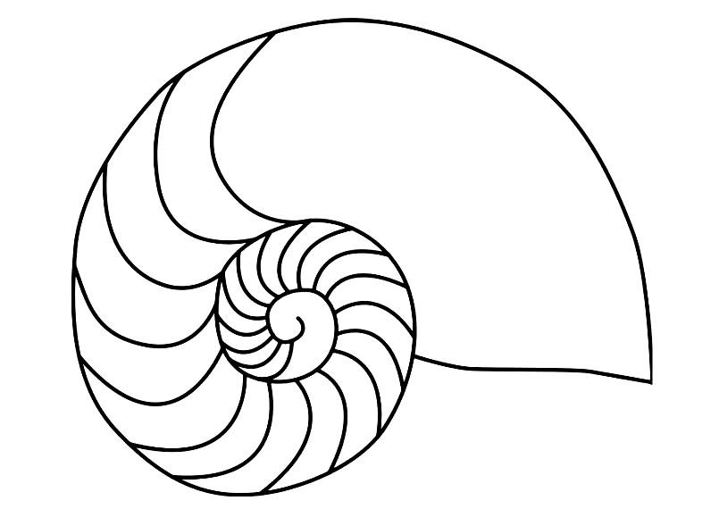 Раскраска моллюск