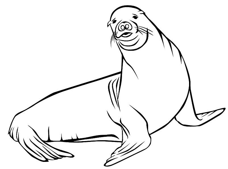 нарисованная тюлень картинка