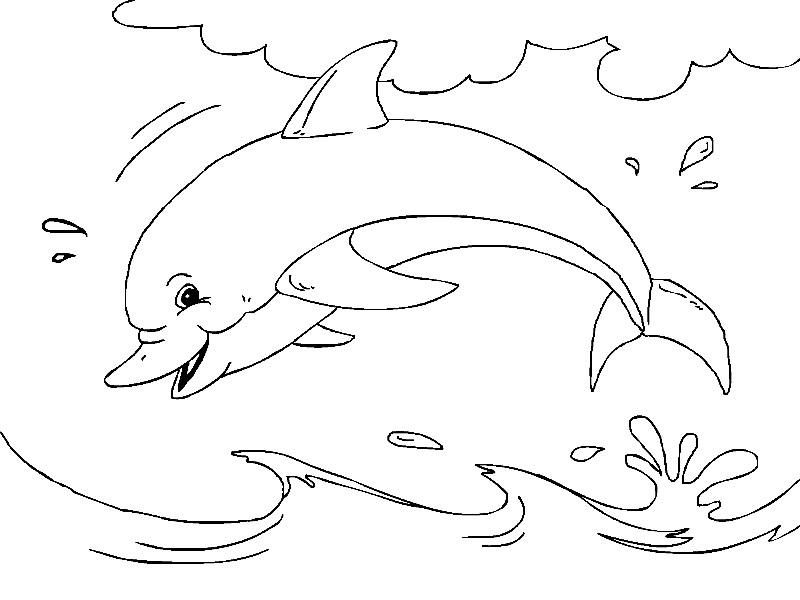 Раскраска два дельфина