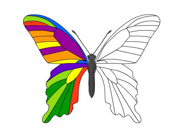 Раскраска радужная бабочка