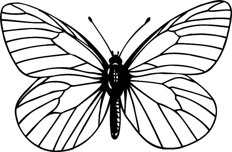 Раскраска бабочка Тигровый парусник