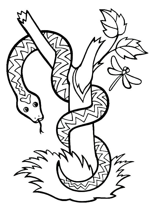 Раскраска змея на дереве