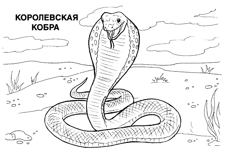 Раскраска королевская кобра | Раскраски для детей ...