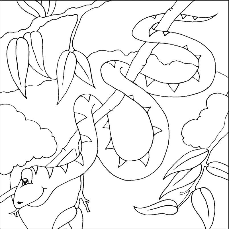 Раскраска змея на ветке