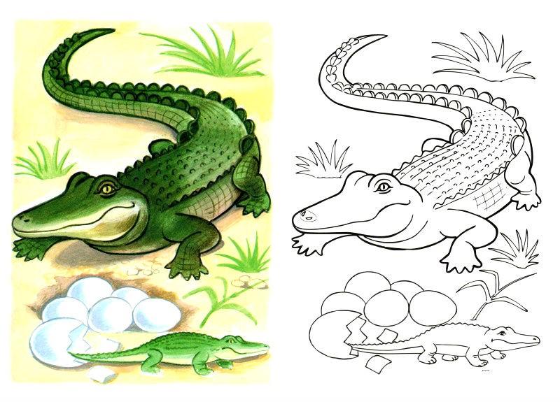 Раскраска крокодил по образцу