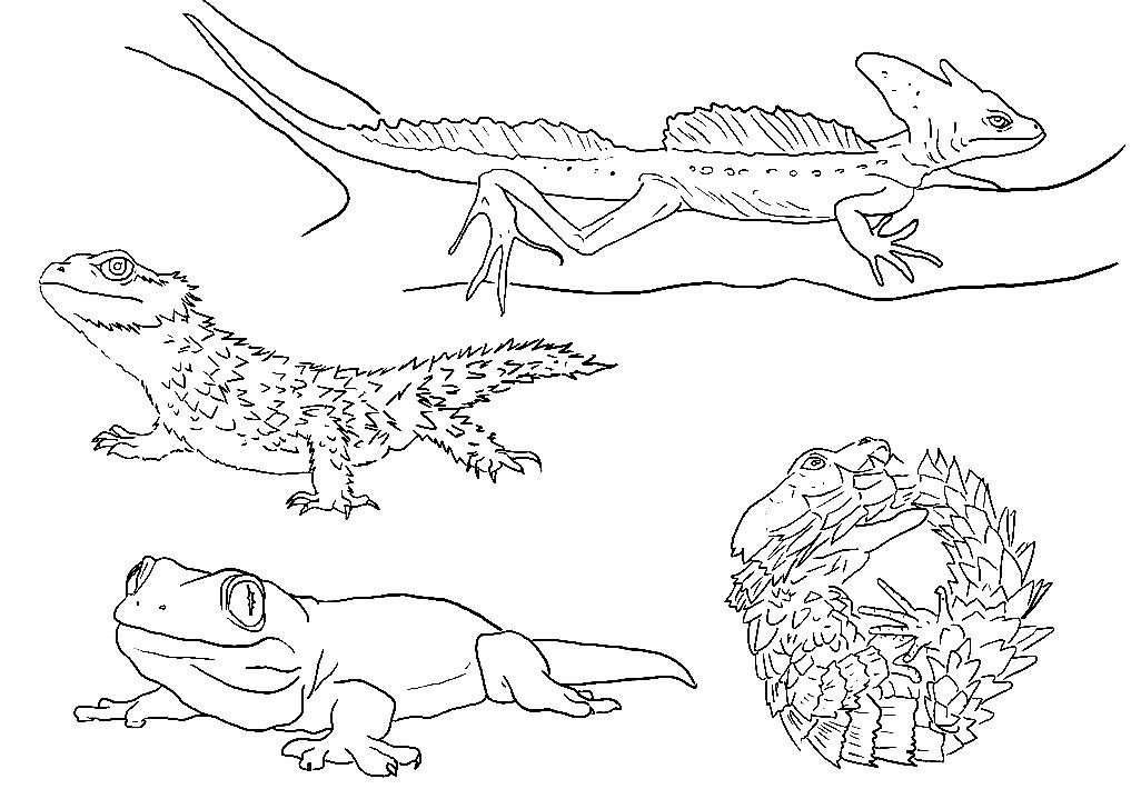 Раскраска разные виды ящериц