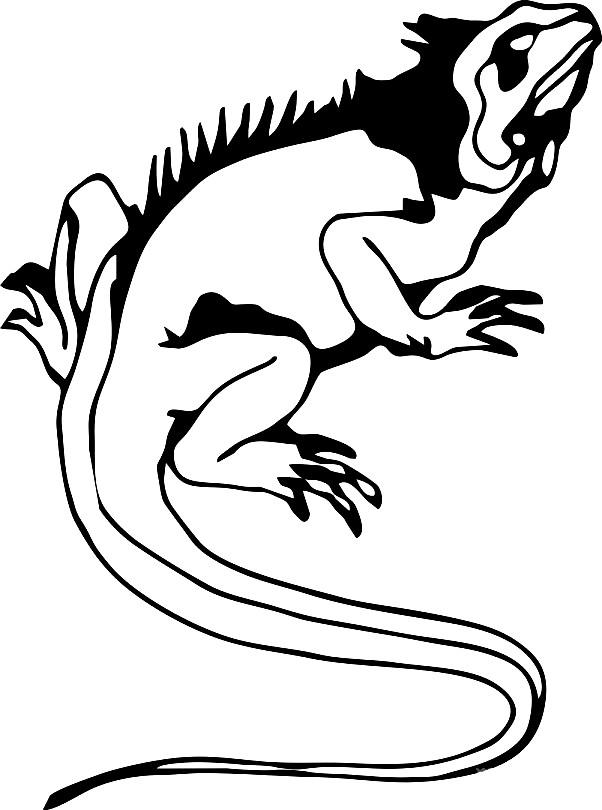 Раскраска ящерица гаттерия