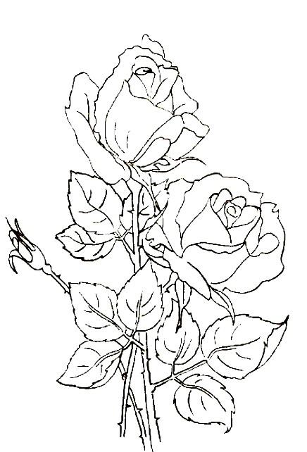 Раскраска роза любви