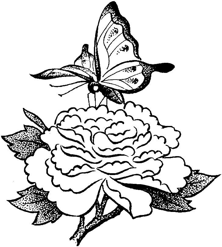 Раскраска роза с бабочкой