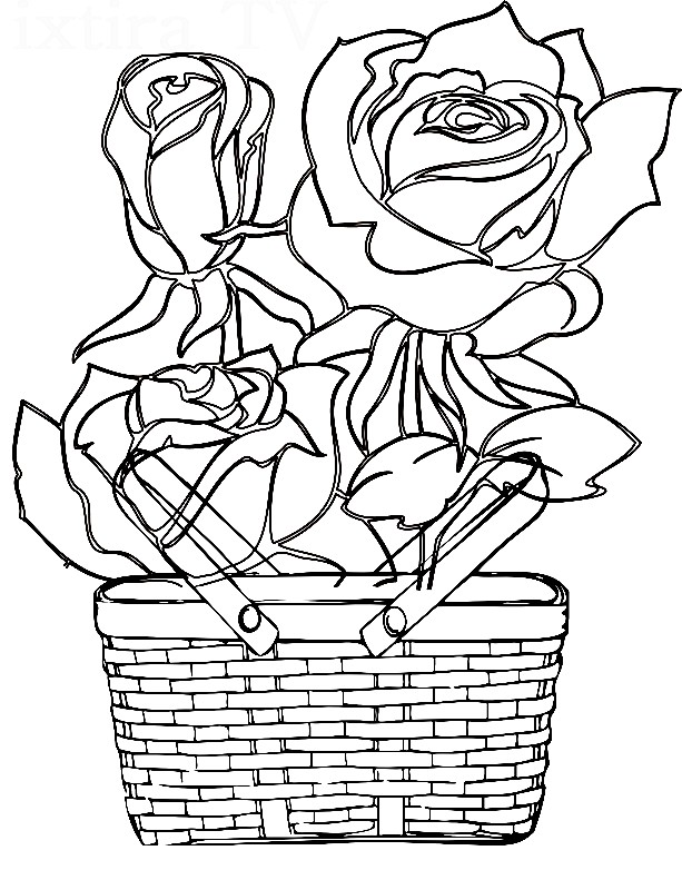 Раскраска розы в корзине