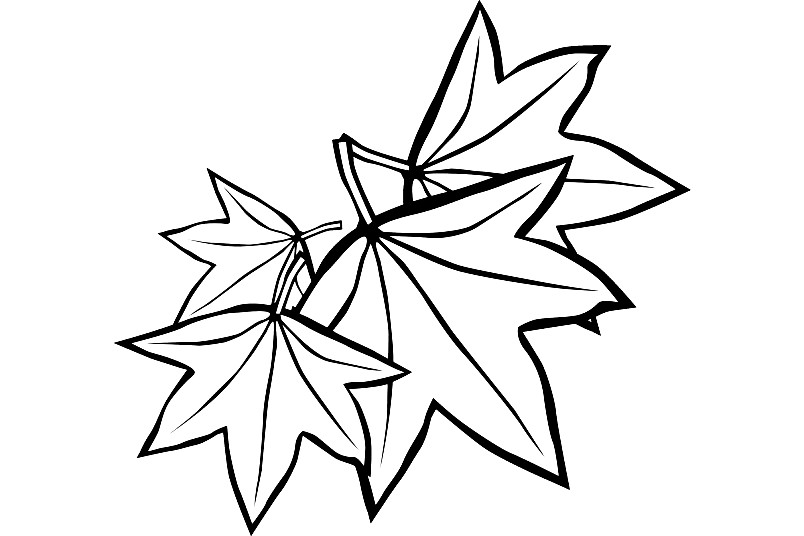 Раскраска листья ясеня