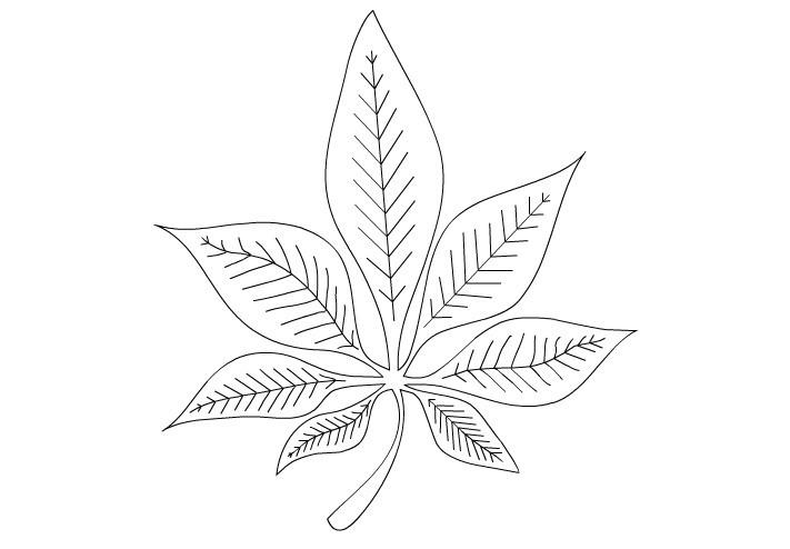 Раскраска лист каштана