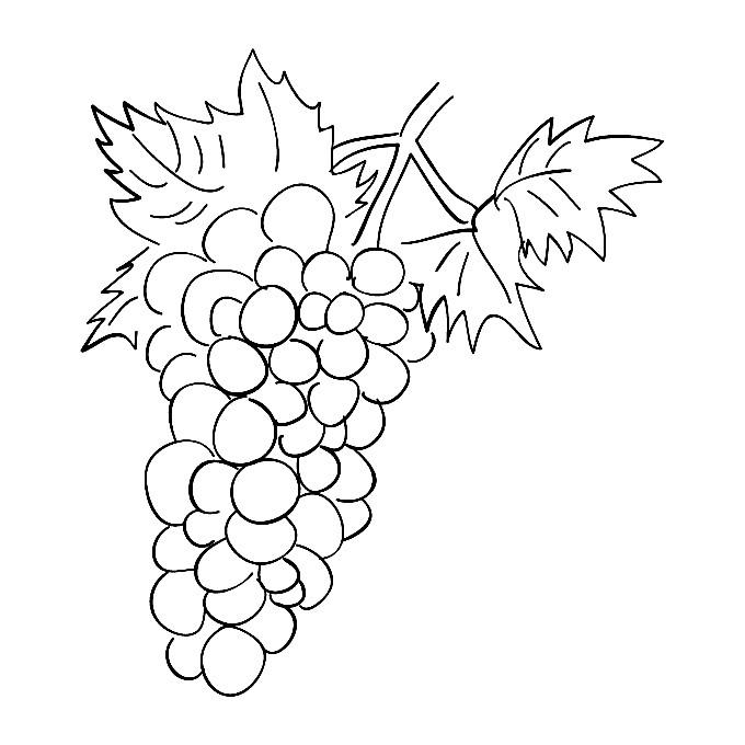 Раскраска виноград | Раскраски для детей распечатать ...