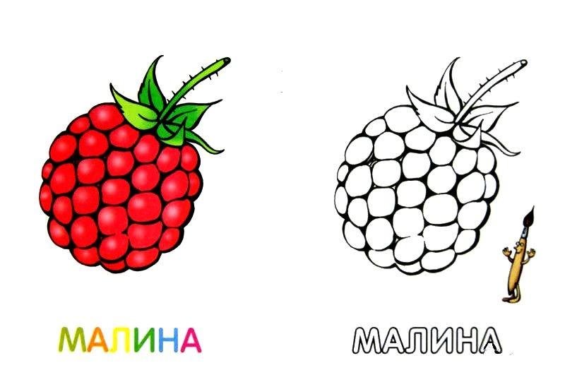 ФРУКТЫ И ЯГОДЫ | Раскраски для детей распечатать бесплатно ...