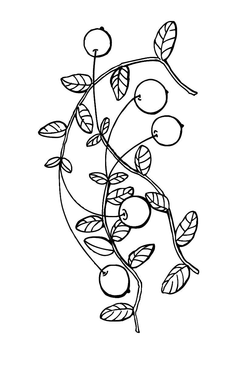 Раскраска вишня на веточке