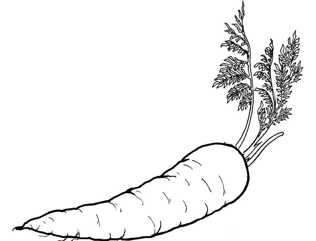 Раскраска морковь