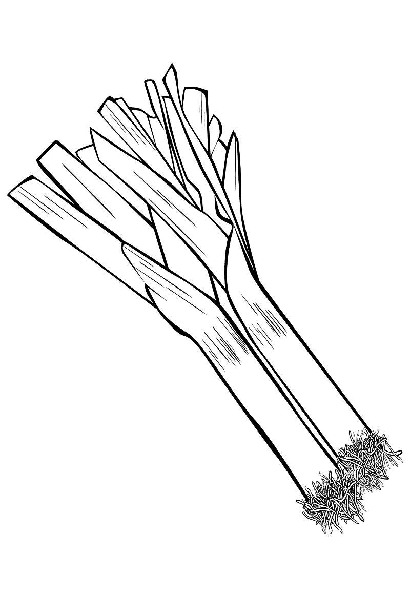 Раскраска лук порей