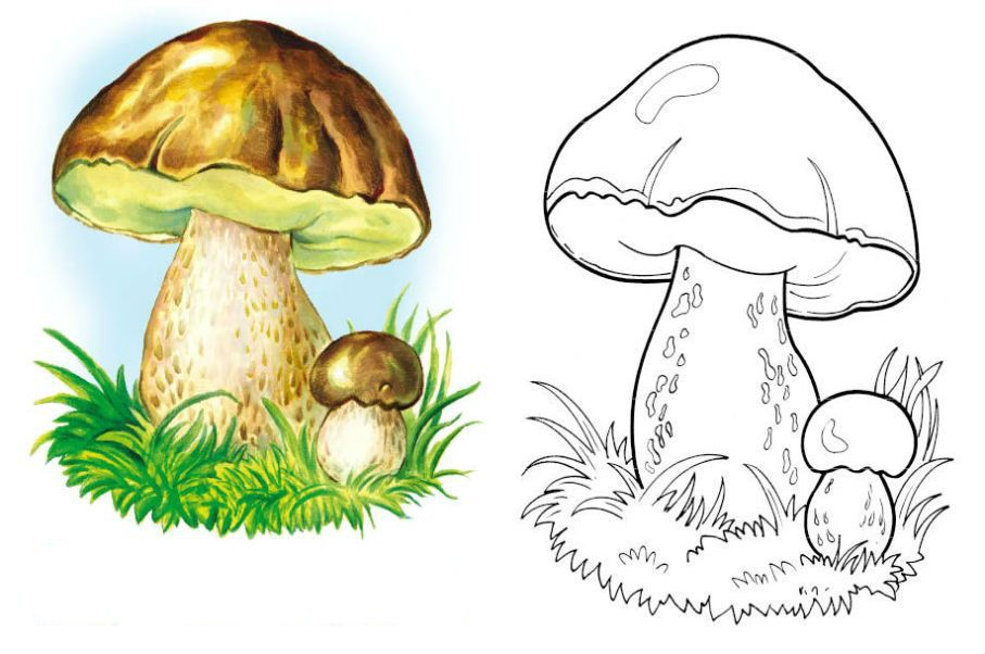 Раскраска красивый гриб