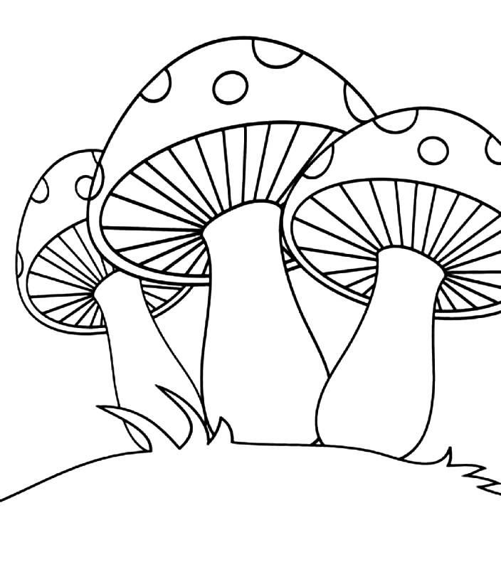 Раскраска три мухомора
