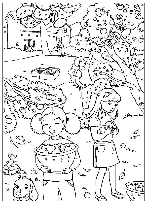 Раскраска сбор урожая