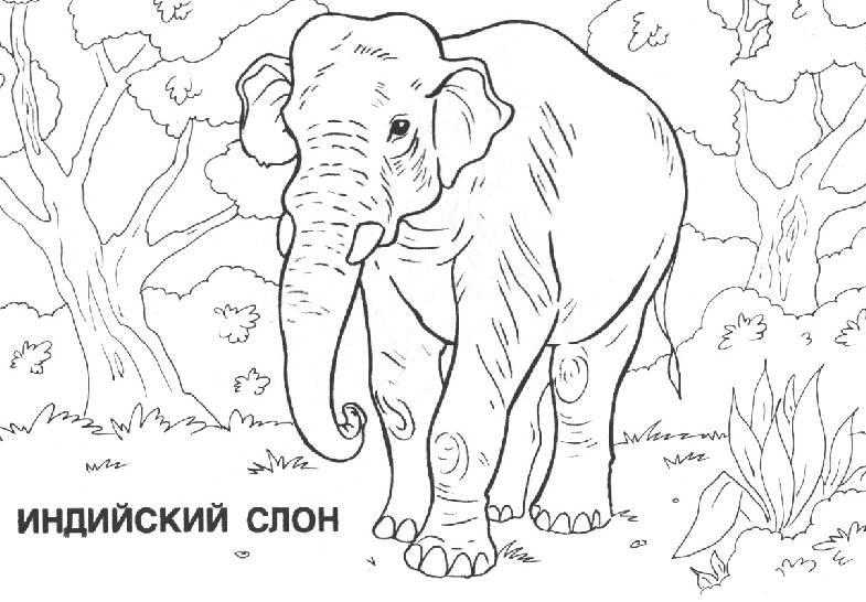 СЛОН | Раскраски для детей распечатать бесплатно в формате А4
