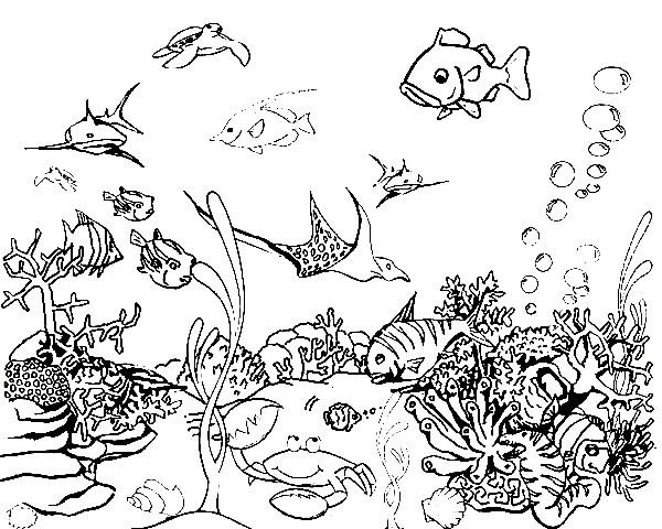Раскраска подводная жизнь